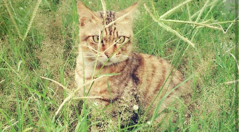IMG 20190104 004244 | Hallo My Name Is Dropi, A Grey Tabby Cat