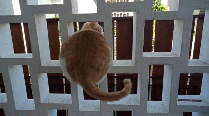 FB IMG 1557645411097   Seperti Manusia, Kucing Juga Bisa Ngambek Lho